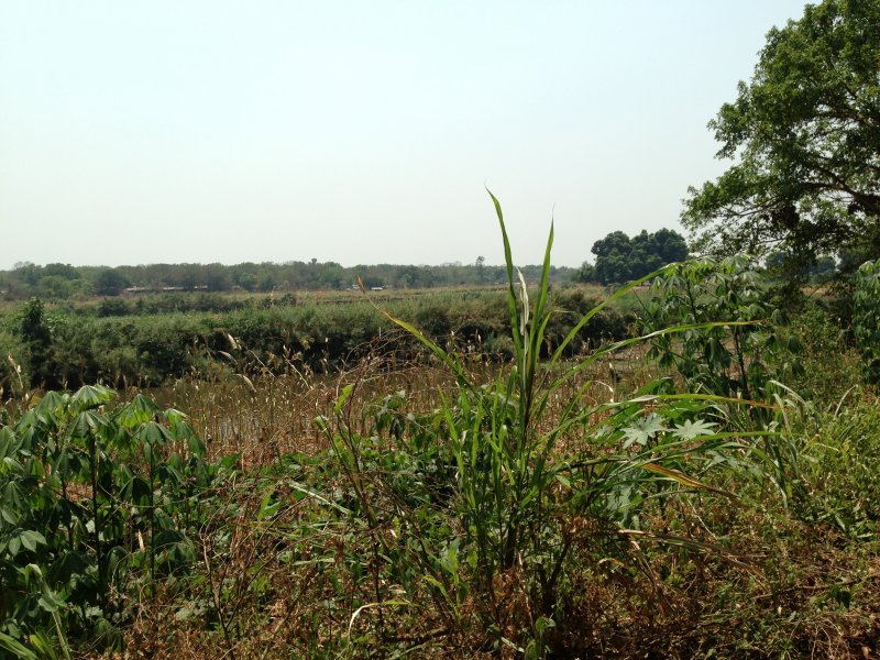 Green Pastures on the banks of the Baro near Gambella.