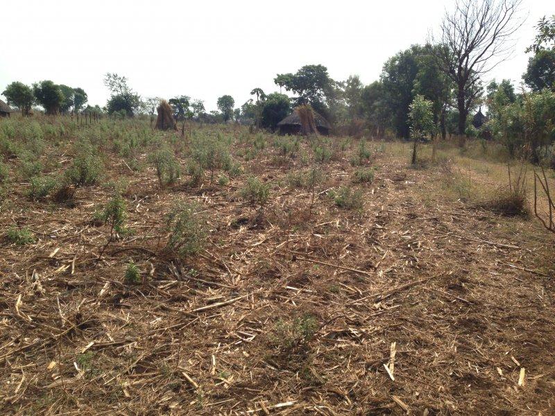 Agribusiness farm.