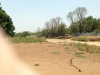 Backyard of our old house across dry Jebjebe streambed.