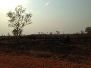 Gambella forest after clearance