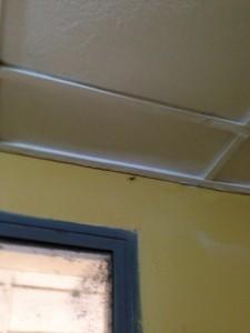 Many bugs also enjoyed my cottage